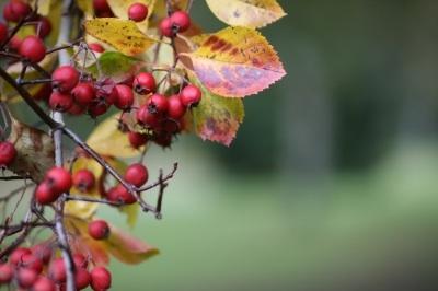 berriesSimon HowdenFDP