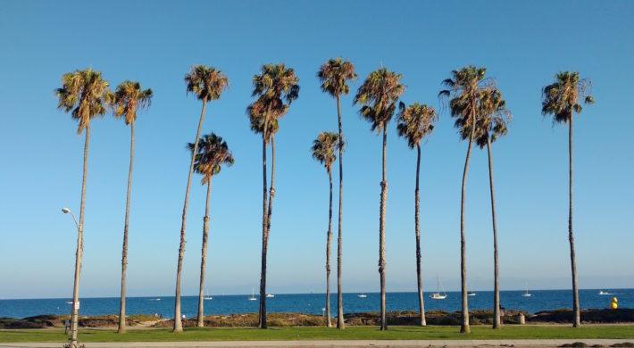 SantaBarbara-PalmTrees
